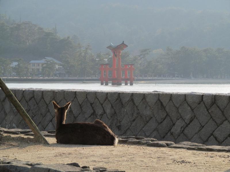 石川台の鉄活動日記-鹿と鳥居