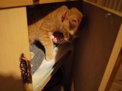 猫達が好きな場所(さわ)