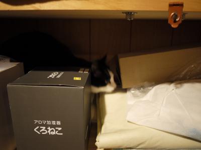 猫達が好きな場所(ジロー)