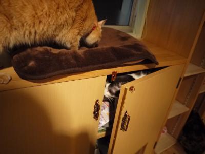 猫達が好きな場所(てんてん)