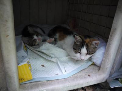 遺棄された猫達①