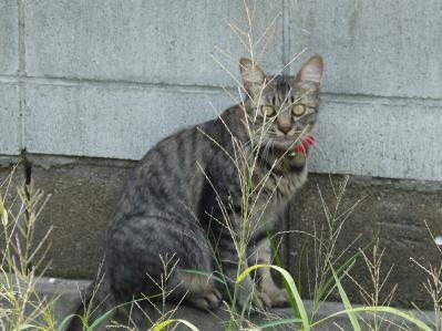 秀林寺で出合った猫