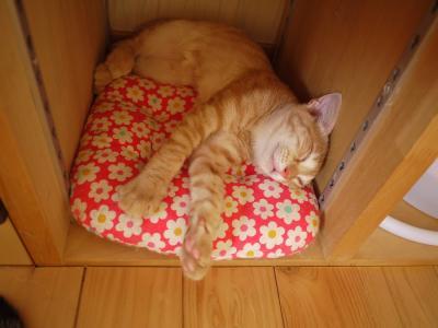 眠る秀ちゃん