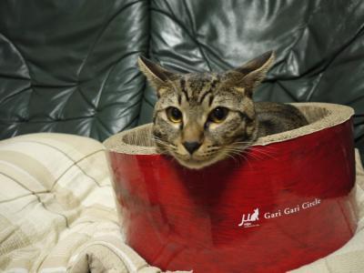 先住猫のスルメちゃん
