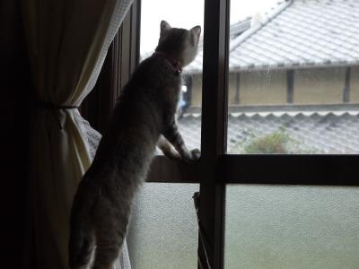 ゆずちゃん、外を見る