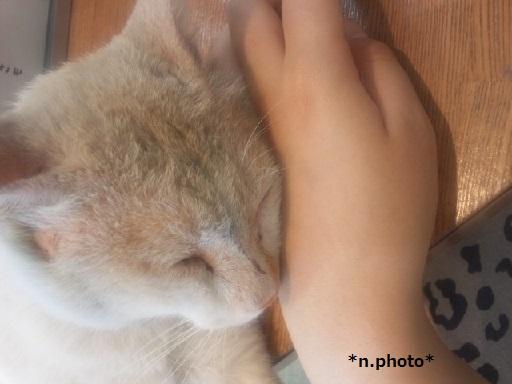1ネコ (7)