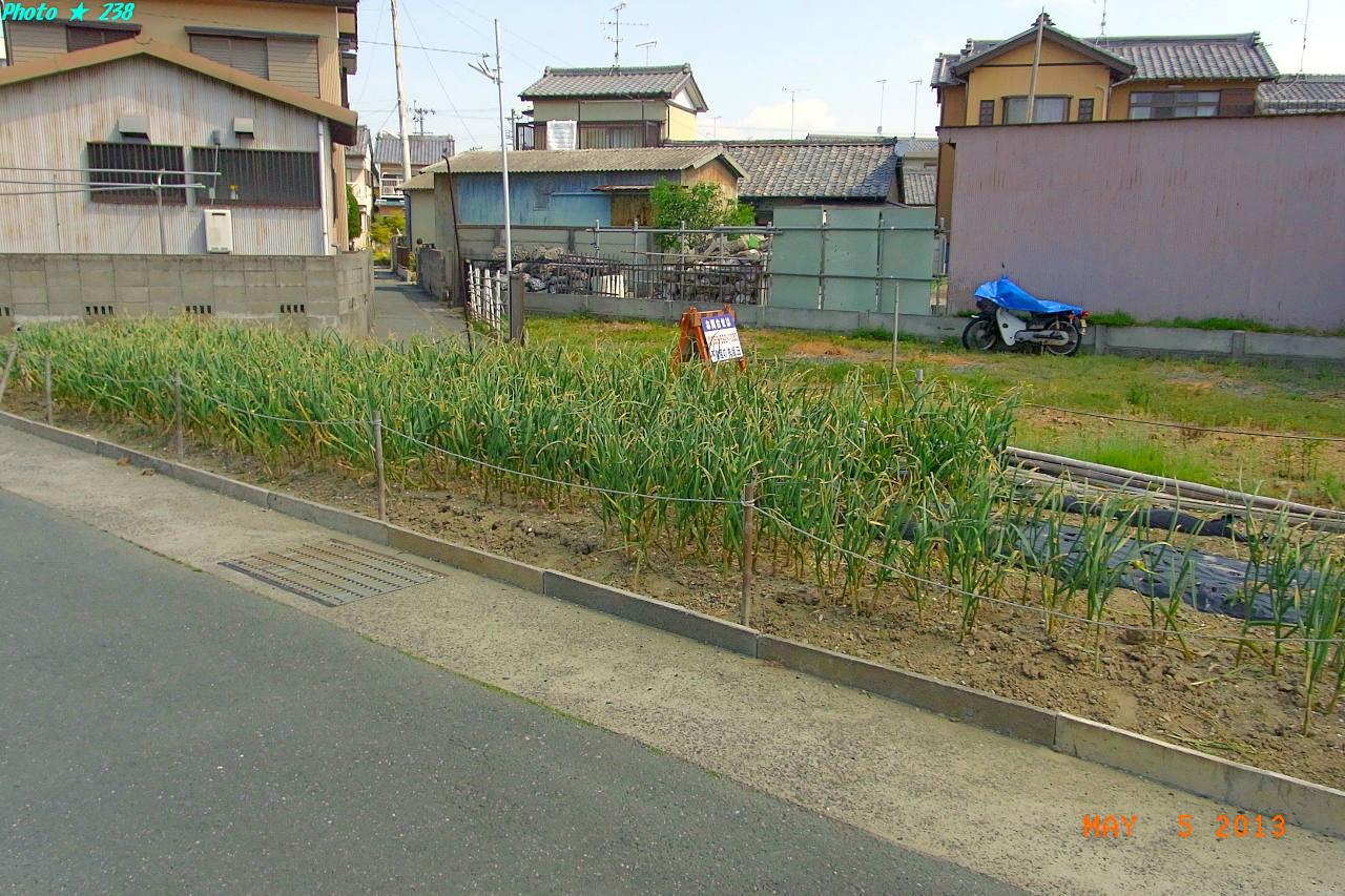130505-Sanpo05.jpg