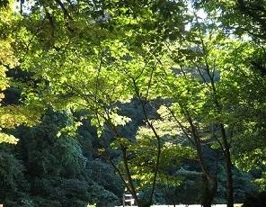 まだ緑の木々