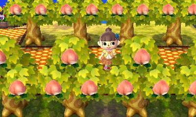 桃の木ロード1