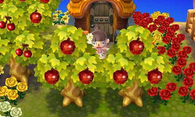 果樹園の真ん中にA