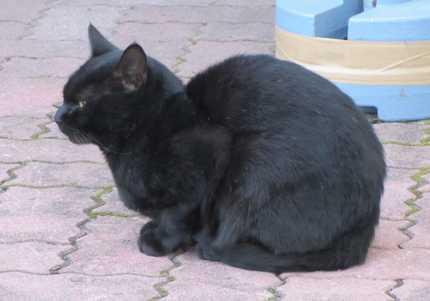 虎渓山 5 黒猫