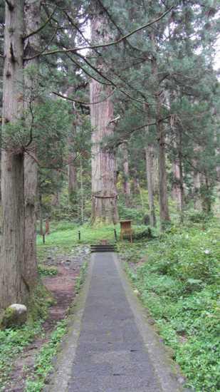 羽黒山爺杉 2