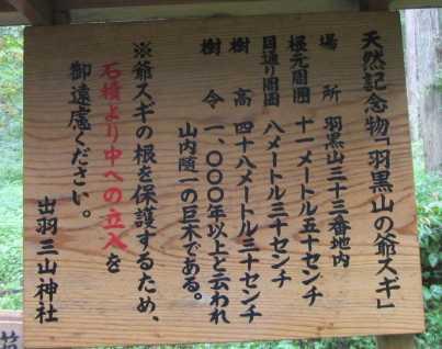 羽黒山爺杉 4