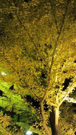 吾妻運動公園 1