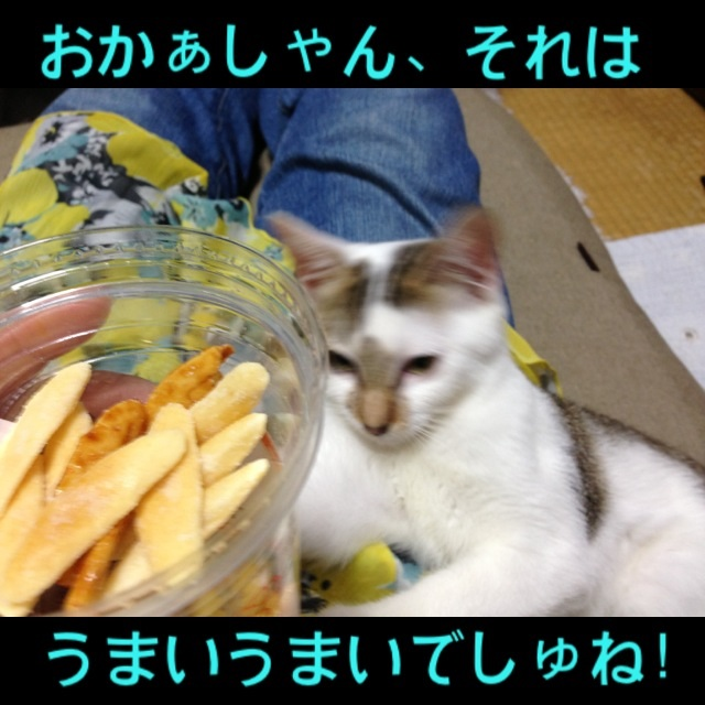 image_20130907131133572.jpg