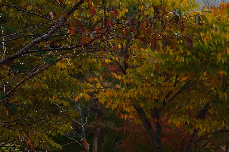 2014-10-21_9147-2-750.jpg