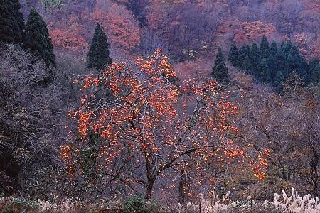 20131129_noririn.jpg