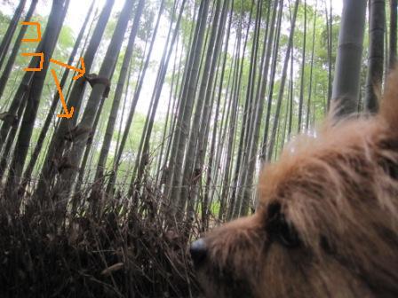 嵐山6月IMG_5350 - コピー - コピー