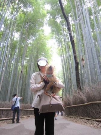 嵐山6月IMG_5370 - コピー