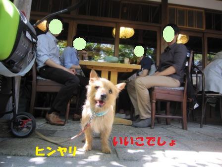 京都蕎麦屋IMG_5329 - コピー