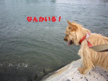川のぞきIMG_5300 - コピー