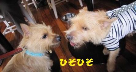 カフェ まーアビIMG_5383 - コピー