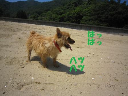 初海IMG_5495 - コピー