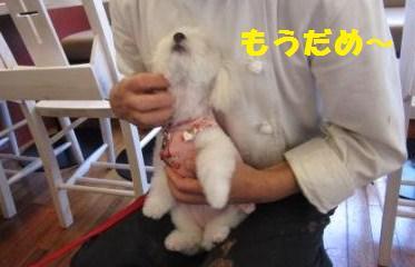 ひなIMG_5565 - コピー