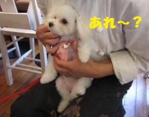 ひなIMG_5564 - コピー