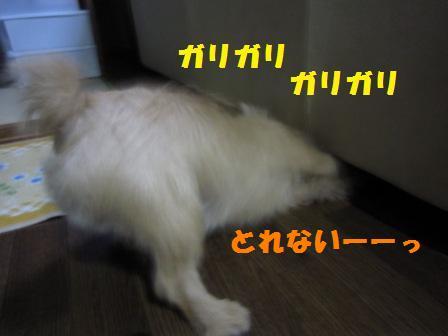 ソファIMG_6008 - コピー