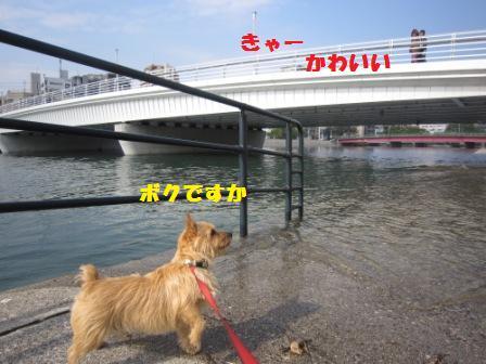 11月川辺IMG_6407 - コピー