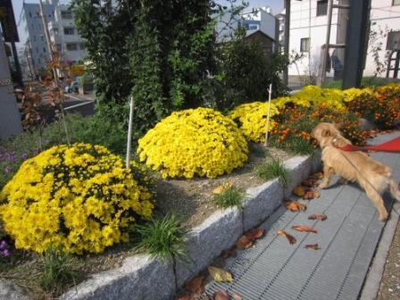 11月川辺IMG_6409 - コピー