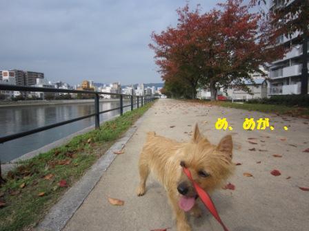 11月川辺IMG_6415 - コピー
