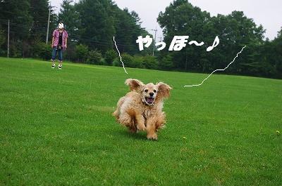 s-牧草アピィ1