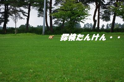 s-牧草アピィ5