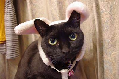 s-ウサギ1