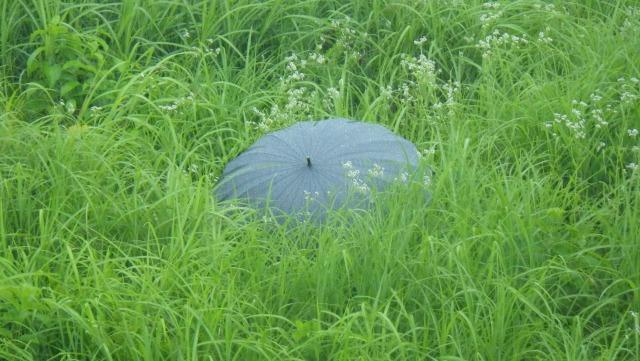 傘「オラオラ、取りに来てみやがれ」