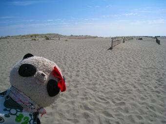 砂砂砂よー