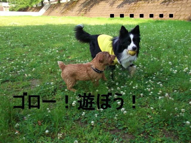 11_20130514171440.jpg