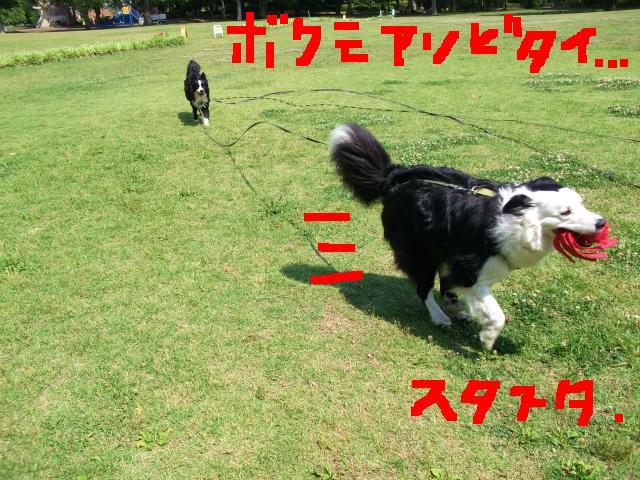 14_20130604192057.jpg