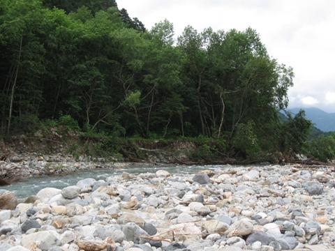 河畔林が崩壊!_R