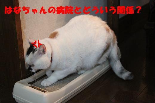 IMG_4203.jpg