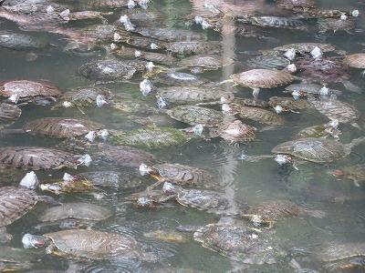 須磨海浜水族園 (11)