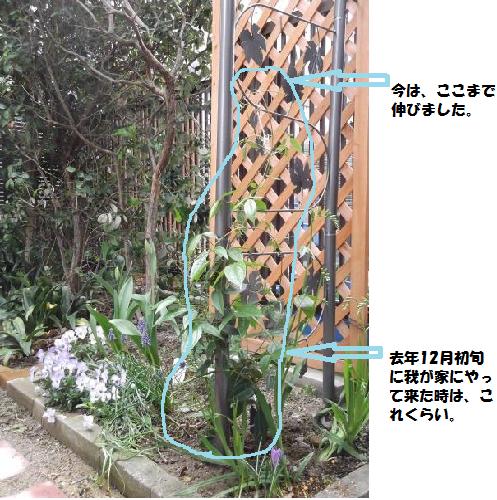 20130403ウンナンエンシス②