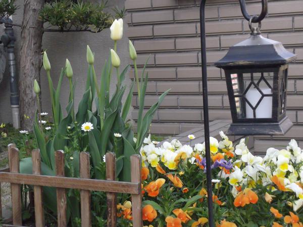 20130413チューリップの花束植え