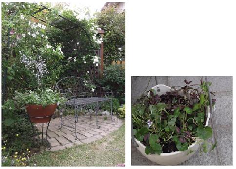 20130525Mさん庭⑫