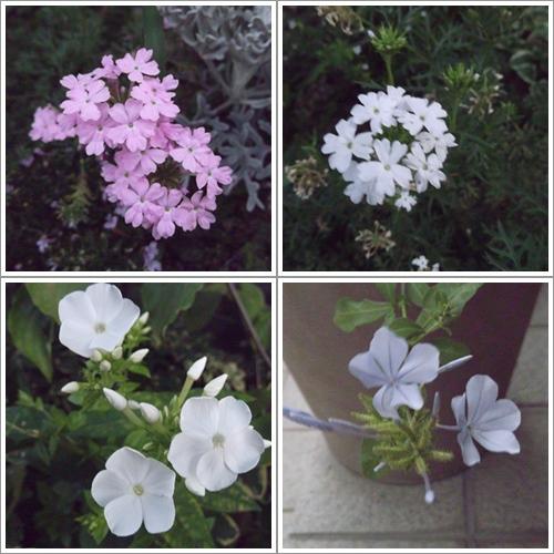 20130802花