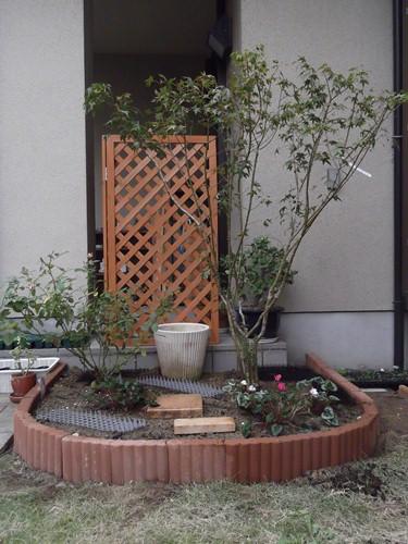 20131106 ゴールドクレスト後花壇