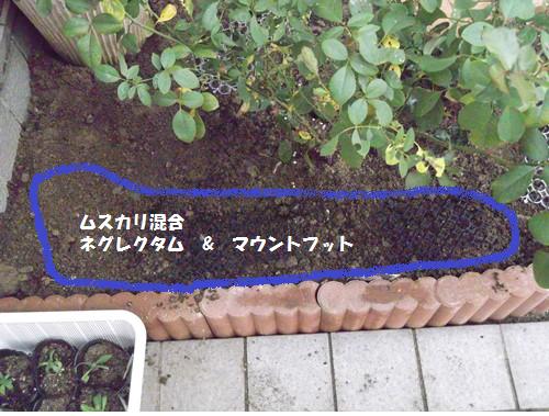 20131106ムスカリ混合