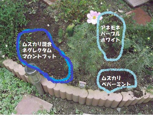 20131106ハナミズキ花壇